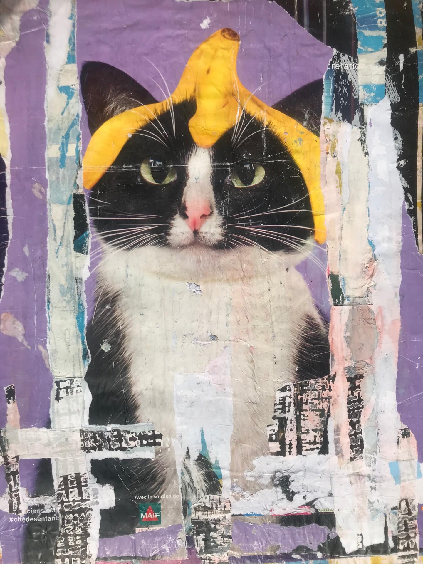 Dominique Kerkhove (DomKcollages) - Ceci n'est pas un chat avec une banane sur la tête !